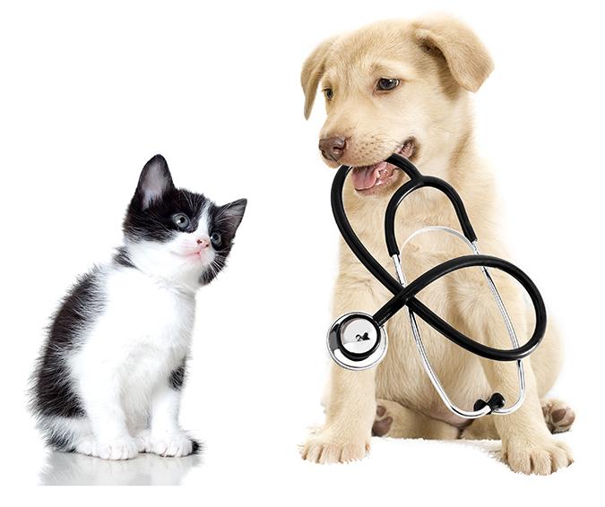 img_medical.jpg